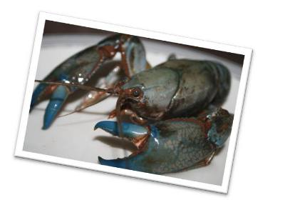 Four Corners Farm Stay - yabbies by the bucket